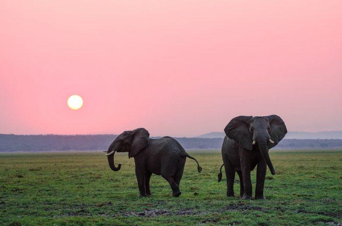 két elefánt